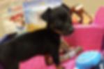 Pup Joy.png