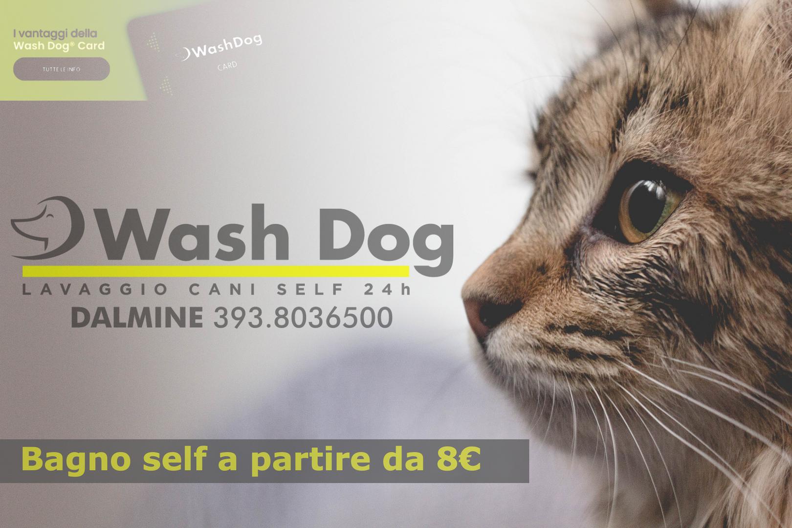 Washdog-Self-Aperto-24h.png