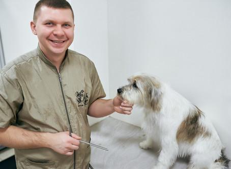 Come fare toelettatura cane a domicilio?