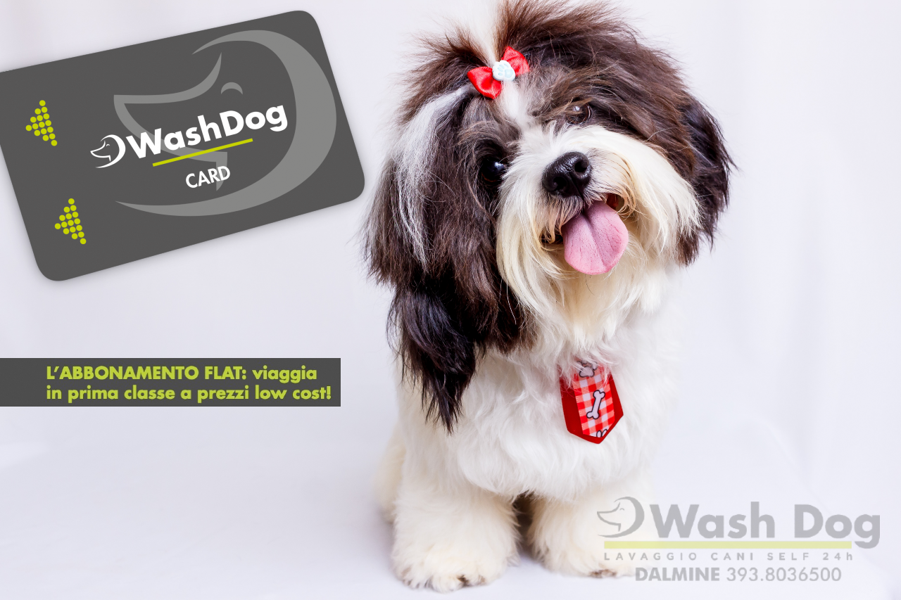 Wash-Dog-Card-Bergamo.png