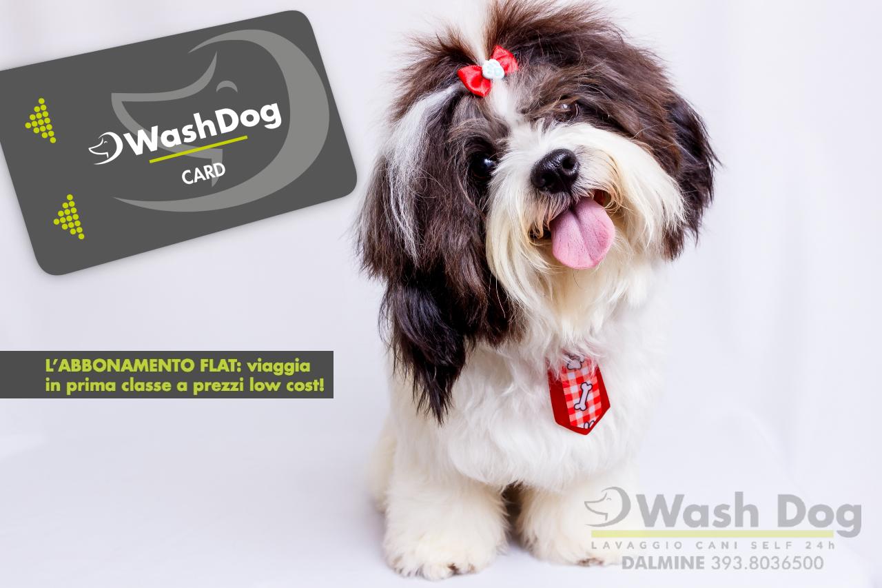 Wash-Dog-Card-Bergamo.png