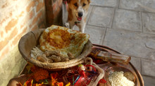 Kukur Tihar (Dog Worship Day)