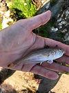 Weaver fish.jpg