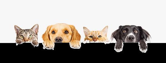 HempandCocbd-for-pets.png