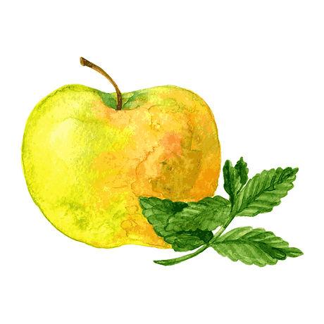 green apple mint.jpg
