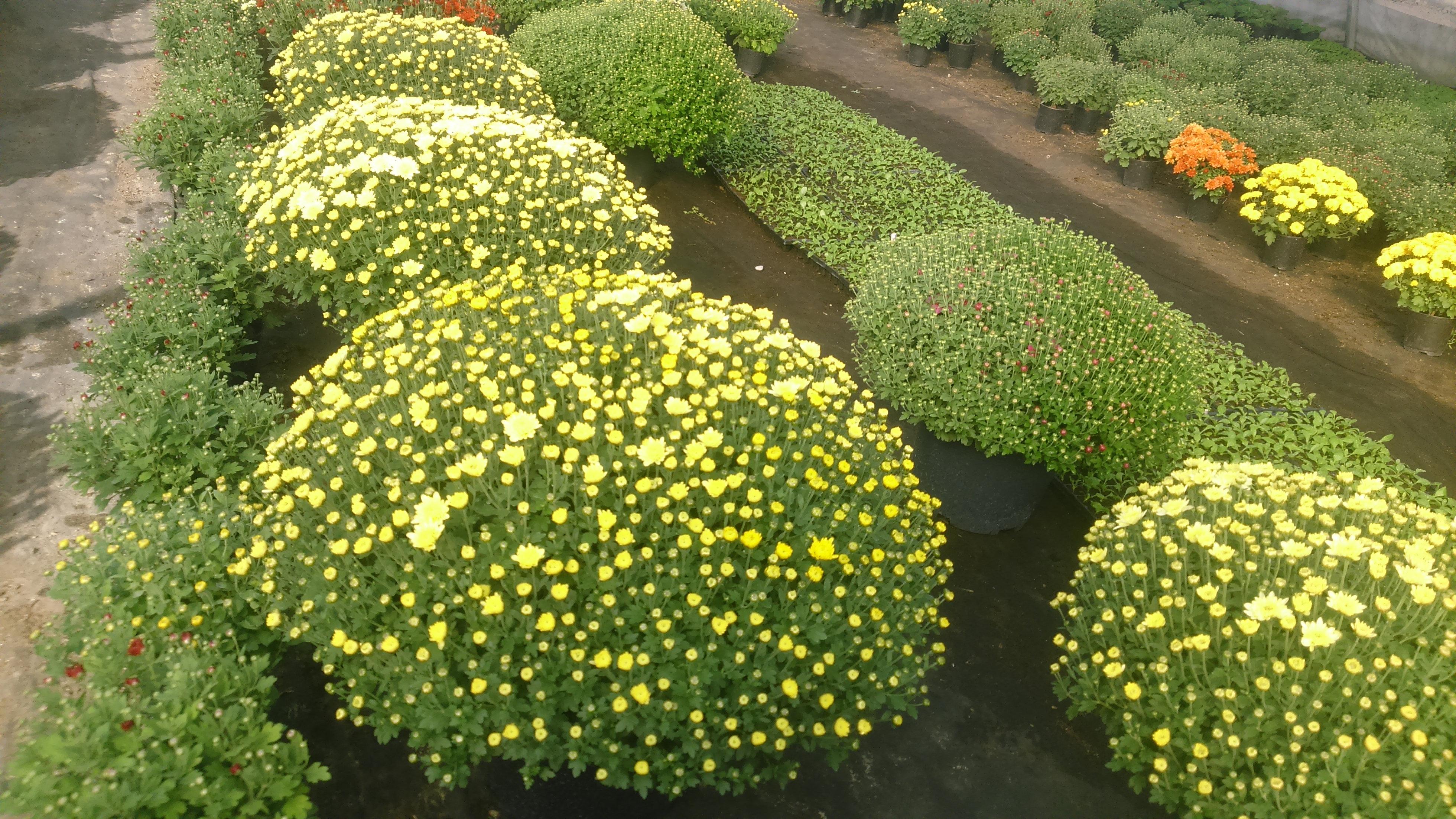Цветы оптом кисловодск
