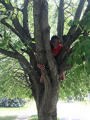 climbingtrees.jpg