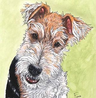Skye Wire Fox Terrier portrait.jpg