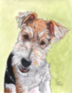 Skye Wire Fox Terrier portrait.jpg