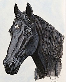 Horse portrait painted acrylic ink