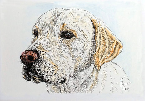 Custom pet portrait of Stella, yellow labrador in pen/ink & acrylic on fine art paper.