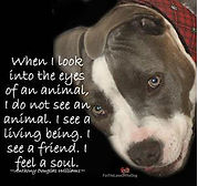 Photo of Dog & quote.jpg