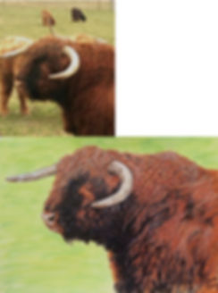 Traditional custom painted portriat of Highland Cattle Bull named McGregor portrait montage.jpg