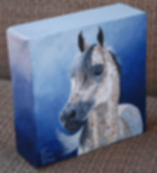 Hand painted horse portrait on canvas in acrylic of Tommy, an Arabian Stallion. Painted by horse and pet portrait artist Fiona Purdy.