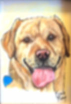 Hand painted dog portrait painting of Yogi, a yellow Labrador, portrait painted on fine art paper