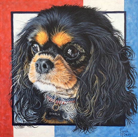 A Cavalier King Charles Spaniel custom portrait by United States professional Dog Artist Fiona Purdy