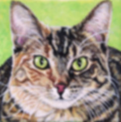 Painted acrylic on canvas cat portrait of Avon, a calico/tabby cat.  Created from a photo by professional pet portrait artist Fiona Purdy