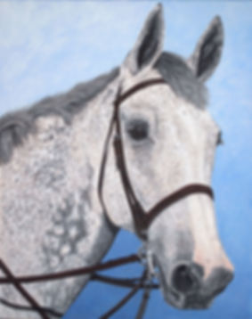 Custom hand painted horse portrait of Quinaro, a Haflinger Hunter Jumper.  Created from a horse photo by professional pet portrait artist Fiona Purdy