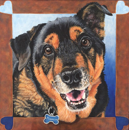 Custom portrait painting of Franklin a German Shepherd by pet portrait artist Fiona Purdy