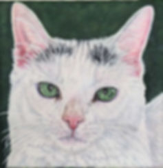 Cat portrait of Kitten Little, hand painted in acrylic on canvas a white domestic cat.  Painted by Fiona Purdy pet portrait artist, USA