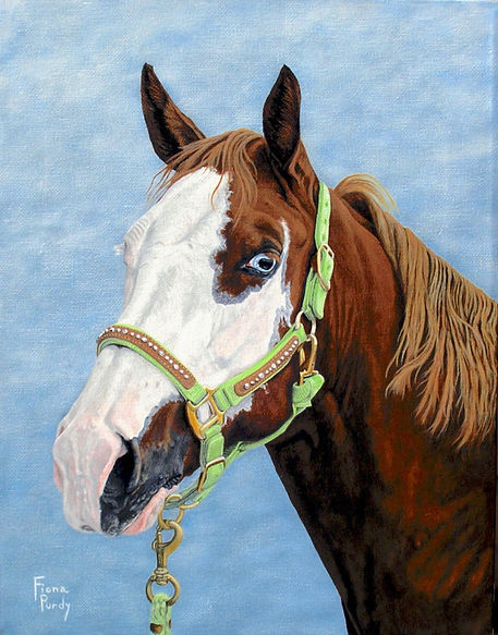 Custom horse portrait painting of Lady a Paint Quarter Horse Mare, painted by professional horse portrait artist Fiona Purdy from photos