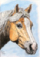 """Custom painted horse portrait of Chance, a palomino quarter horse.  Acrylic & Pen & Ink painting on 5""""x 7"""" fine art paper by professional horse artist Fiona Purdy"""