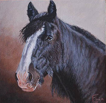 Custom painted horse portrait of Tally, a Shire Horse Mare, painted by professional horse portrait artist Fiona Purdy from photos
