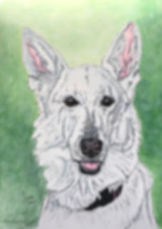 Belle White German Shepherd portrait.JPG