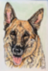 Custom pet portrait of Roxie, a German shepherd dog. Painted on fine art paper in pen/ink & acrylic