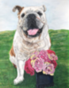 Pen and Ink pet portrait of Grace, a female English Bulldog, created by professional dog artist Fiona Purdy