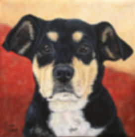 Hand painted dog portrait of Mei Mei, a mixed breed, created by professional dog artist Fiona Purdy
