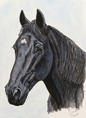 Tennessee Walking Horse Painted Portrait
