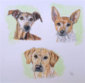"Painted dog portraits of Noodles a basenji mix, Natalie agreyhound & Chrissy, a golden retriever by United States pet portrait artist, Fiona Purdy. Acrylic & Ink on 12""x 12"" fine art paper portrait"