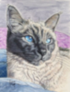 Hand painted pet portrait of Perry, a Lilac Siamese cat. Cat portraits make cherished gifts for cat lovers