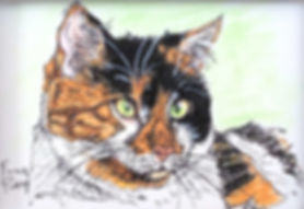 Custom pet portrait of Samantha, a calico cat.
