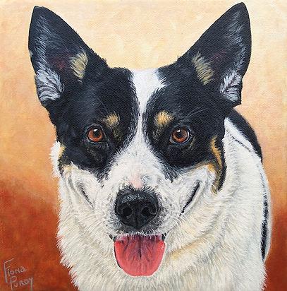 Splash Australian Cattle Dog Acrylic on canvas Custom Dog Portrait
