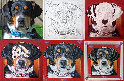 Pet Portrait progression of a Hound Dog