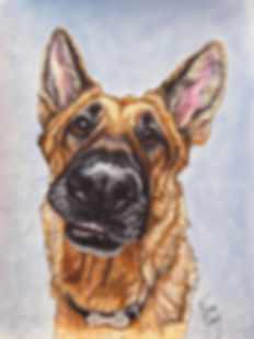 Custom painted dog portrait of Kona a German Shepherd, painted by professional dog artist Fiona Purdy