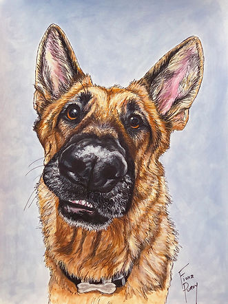 Pet Portrait of Kona German Shepherd.jpg