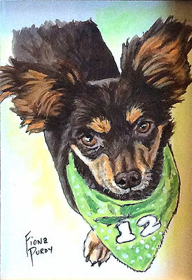 Custom pet portrait of Walter, a long haired Chihuahua.Portrait of dogs make great gifts