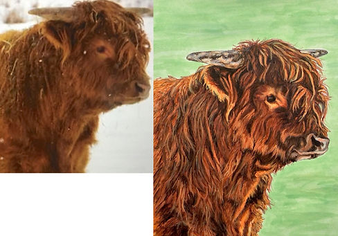 Hand painted portrait of Highland Cattle Bull named McGregor 2