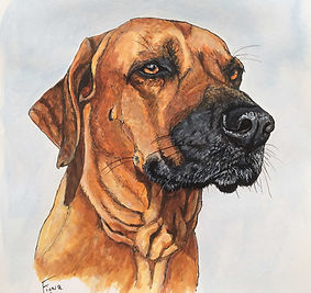 Ink and Acrylic dog portrait Rhodesian Ridgeback