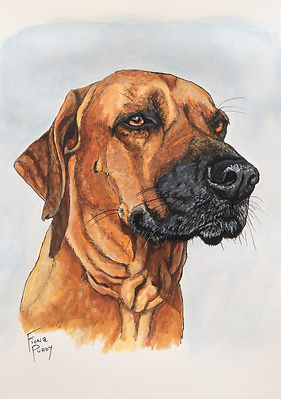 Custom pet portrait painting of Gunnar a Rhodesian Ridgeback painted by pet artist Fiona Purdy, Arizona USA