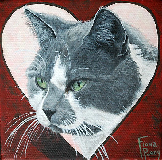 Custom cat portrait painting of Bo, a grey and white cat, painted by professional cat portrait artist Fiona Purdy from photos