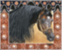 Acrylic on canvas horse portrait of Champion Arabian Stallion Selket Marque, with trademark border painted by professional horse portrait artist Fiona Purdy.