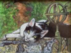 Black & White Cat Pet Portrait
