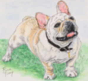 Hand painted dog portrait painting of Scooter, a french bulldog, portrait painted on fine art paper