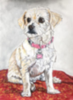 Custom painted dog portrait of Abby, a mixed breed, created by professional dog artist Fiona Purdy
