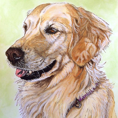 Hand painted dog portrait of Brooklyn a Golden Retriever, by dog portrait artist Fiona Purdy