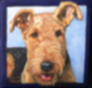 Fine art hand pained portrait of an Airedale Terrier.